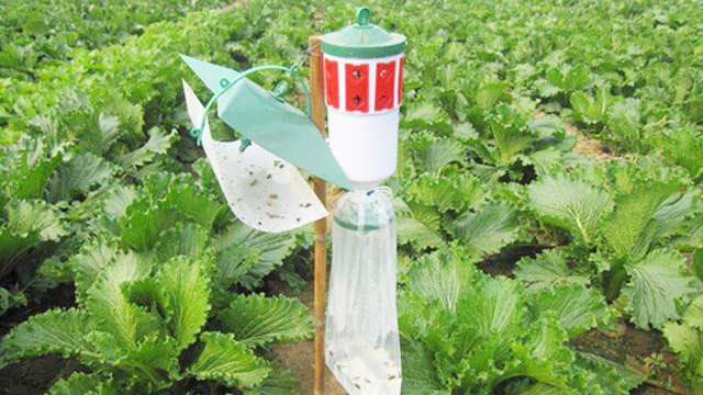 害虫诱捕器有什么优点呢?泽农生物告诉您!