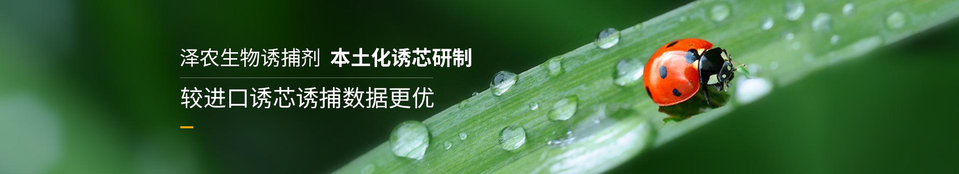 泽农生物本土化诱芯研制