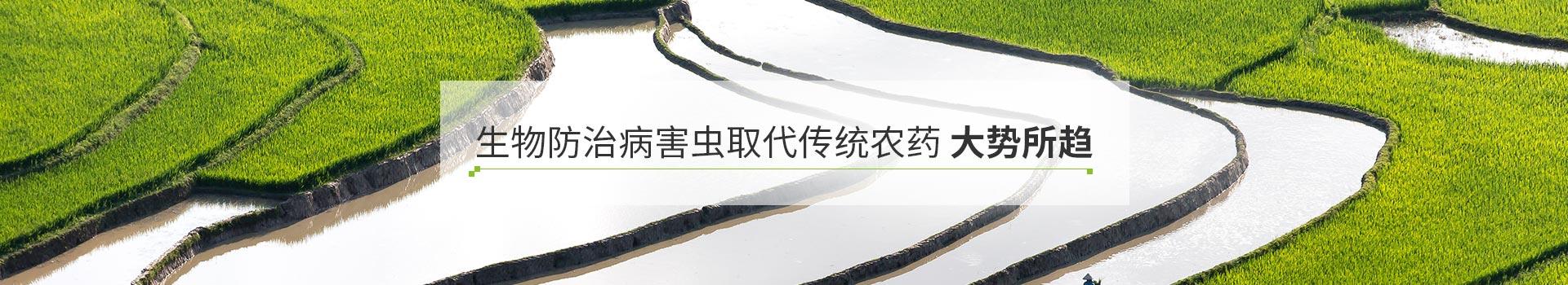 泽农生物防治病害虫取代传统农药大势所趋