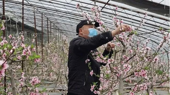 综合预防桃树常见病虫害的几种措施